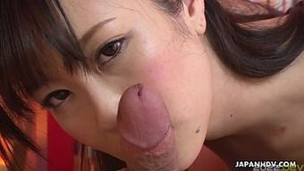 Japanese babe, Kotone Amamiya licks dick, uncensored